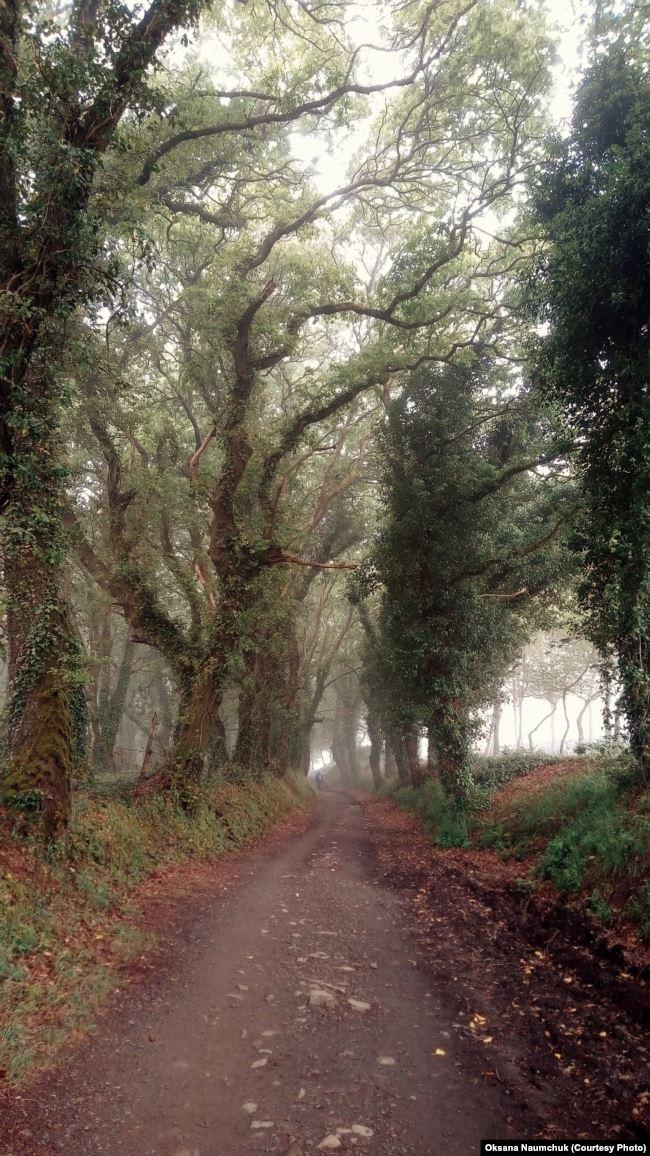 У дорозі я читала книгу «Хоббіт». Регіон Галіція дуже потішив старезними покрученими, вкритими плющем, деревами, наче вони саме з цієї книжки