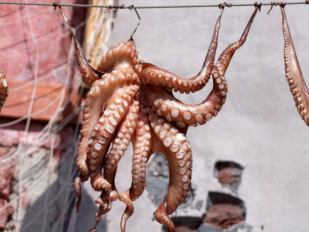 squid-689385_1280.jpg