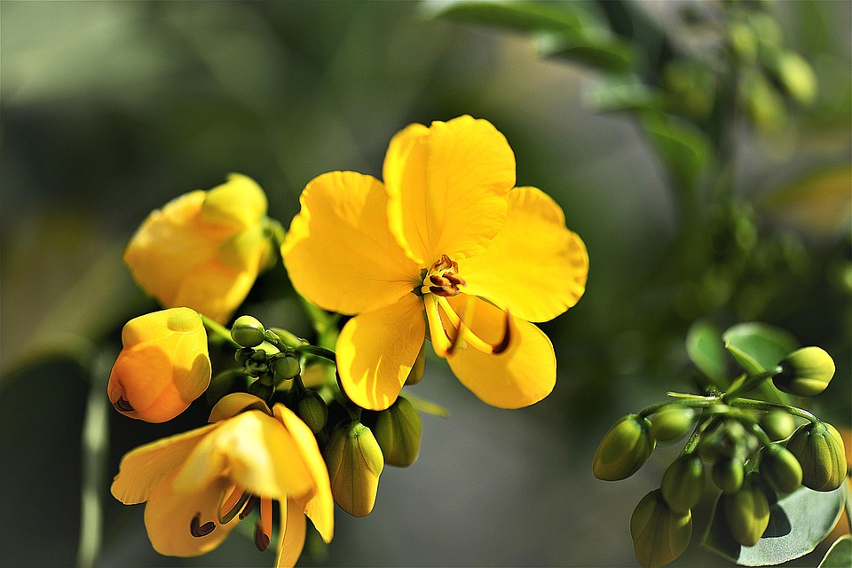 natural remedies for constipation senna