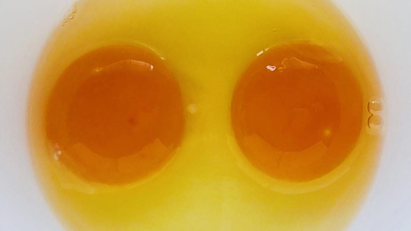 「二黄卵」とは?