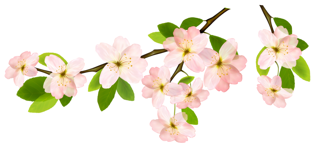 C:\Users\Anton\Desktop\Spring_Branch_PNG_Clipart_Picture.png