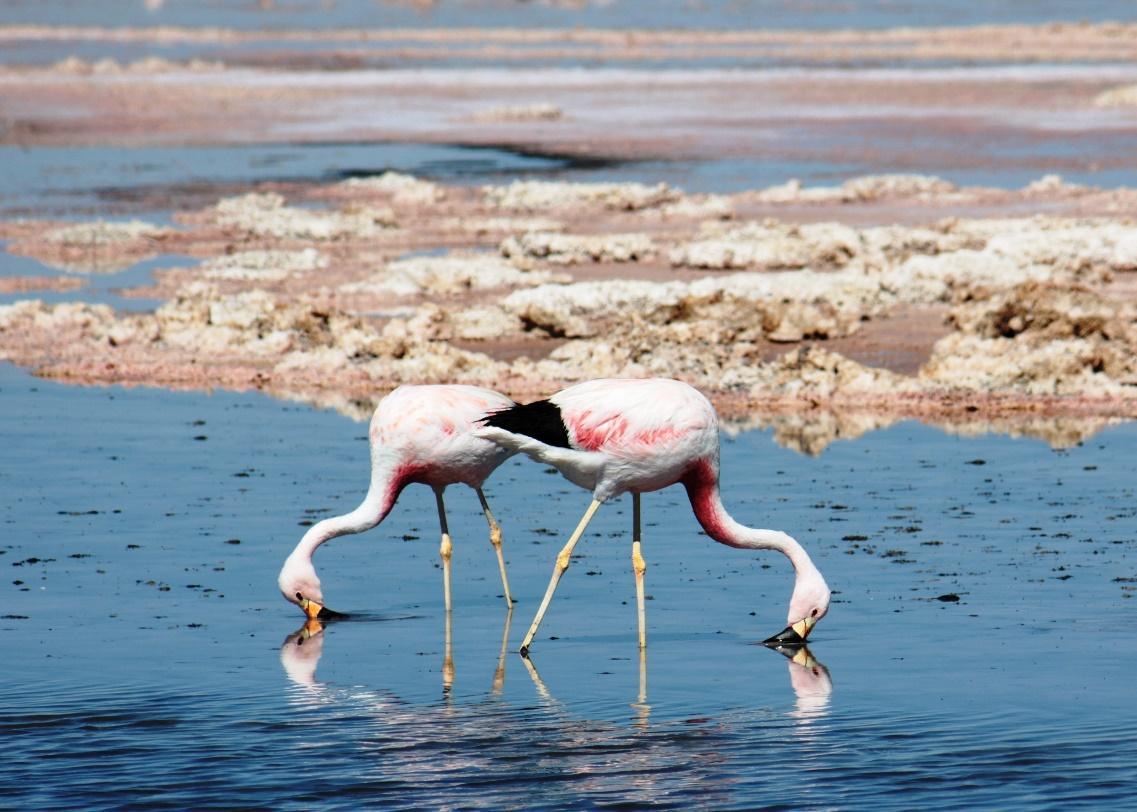 Atacama Salt Flat (Salar de Atacama)