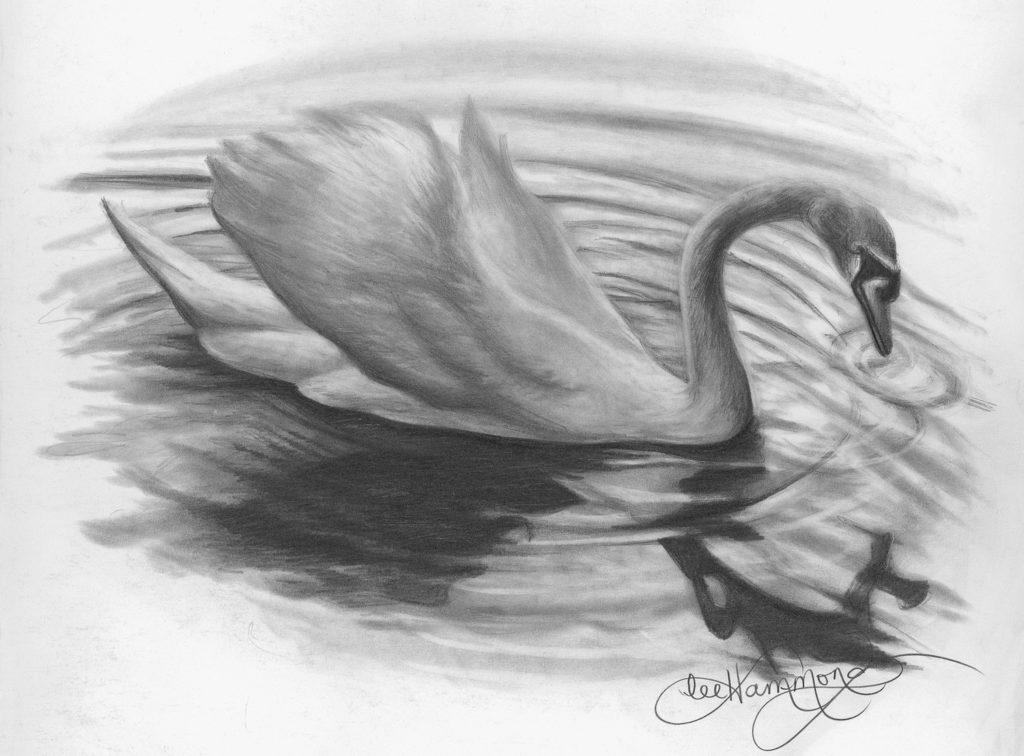 Swan của Lee Hammond, than chì trên khẩu súng lục mịn |  Khái niệm cơ bản về bút chì vẽ |  Mạng lưới nghệ sĩ