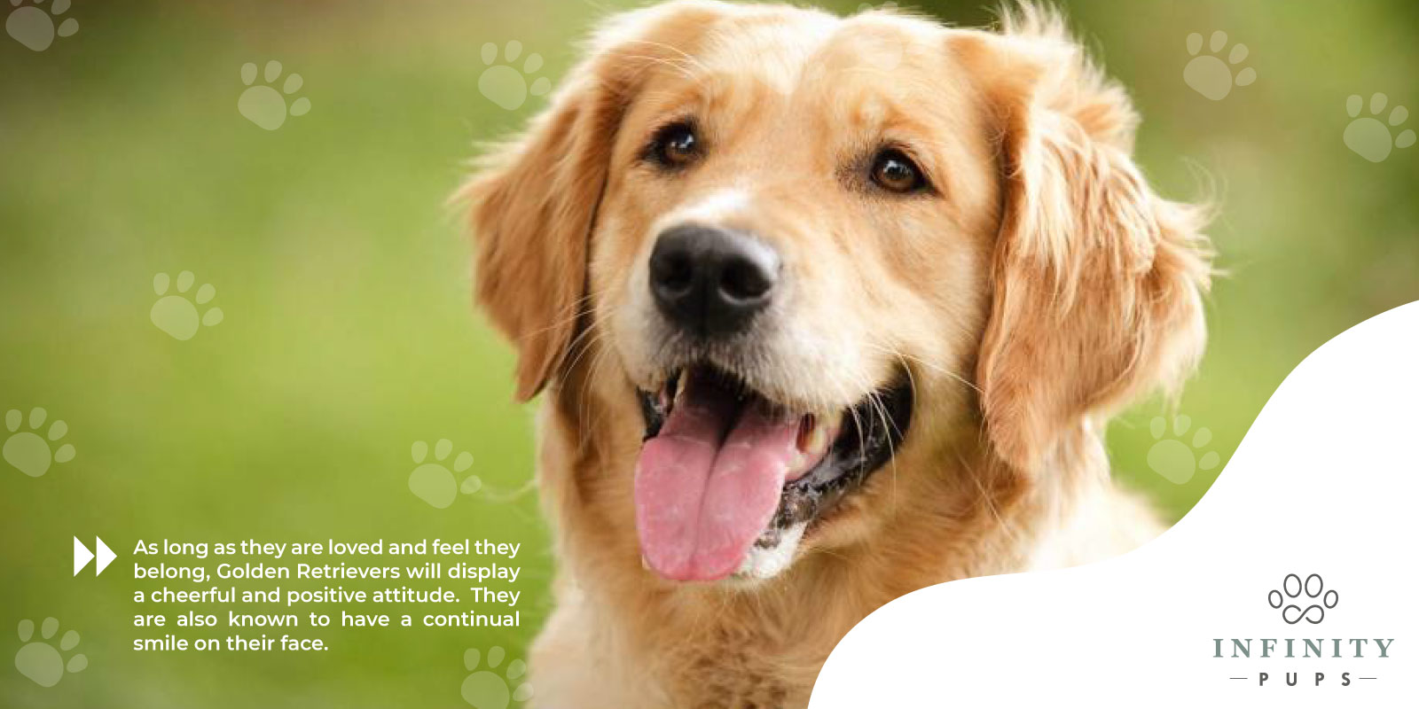 golden retrievers have a cheerful and positive attitude