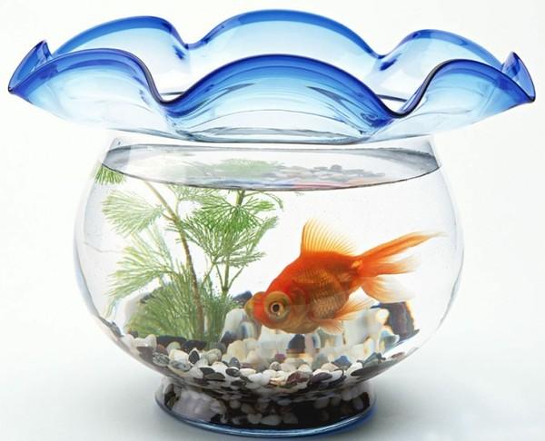 bể cá không nên to quá vì điều đó sẽ làm mất đi tính cân đối của phòng khách