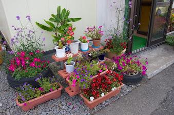 宮島さんのご自宅を飾る花