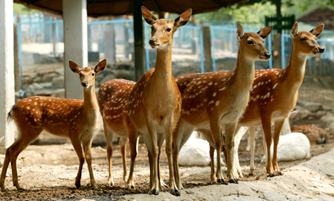 Seoul_Zoo.png