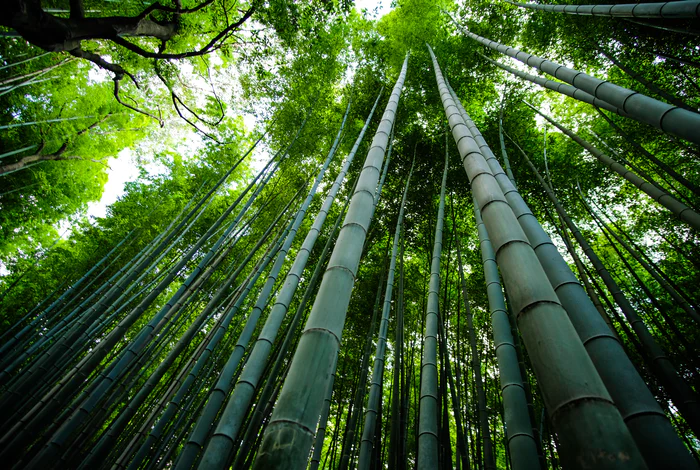 日本の木の種類
