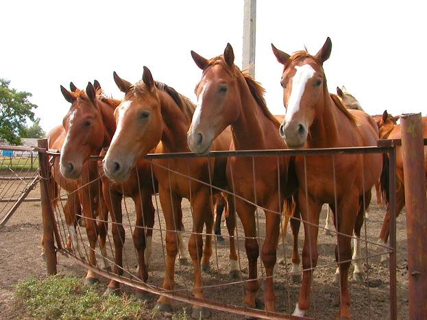 Прогулка на лошади Полтава, InGreen