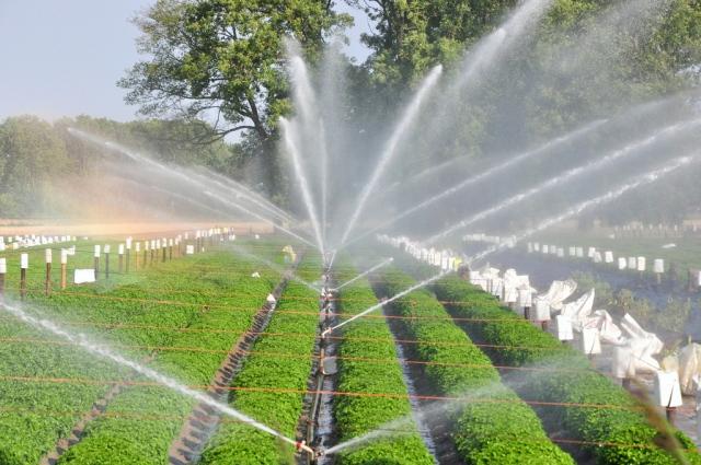 Béc phun nước lắp đặt trong hệ thống tưới rau tự động