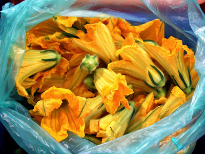 Squash Blossoms in Cyprus