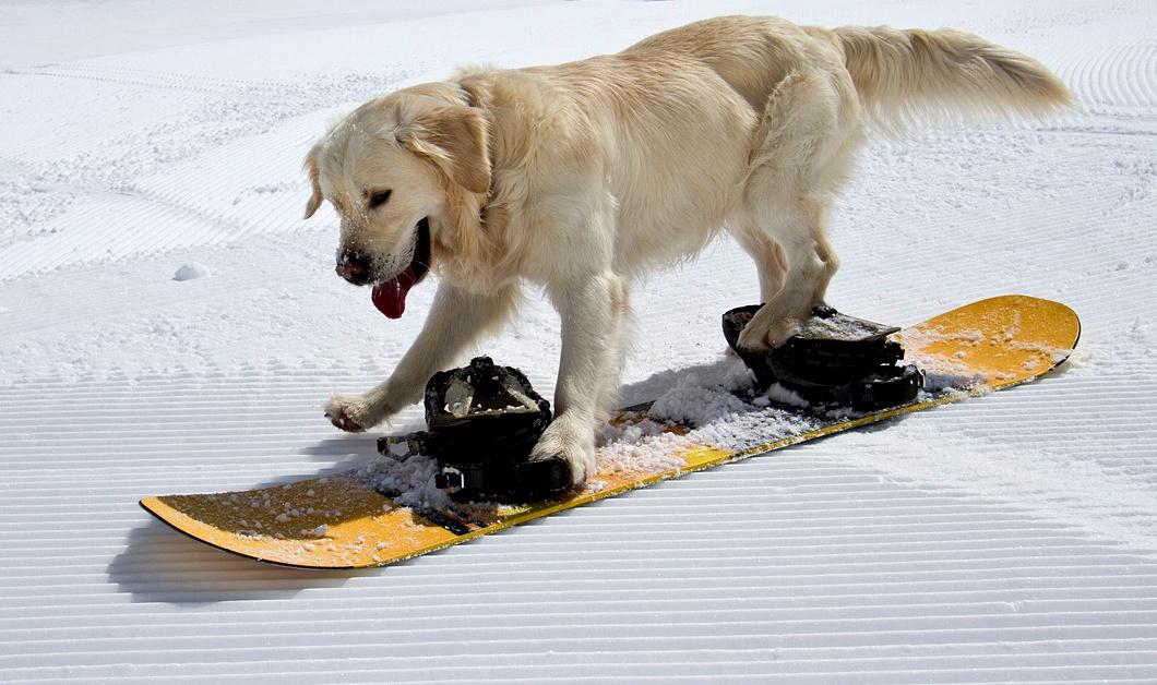 snowdog-005_0.jpg