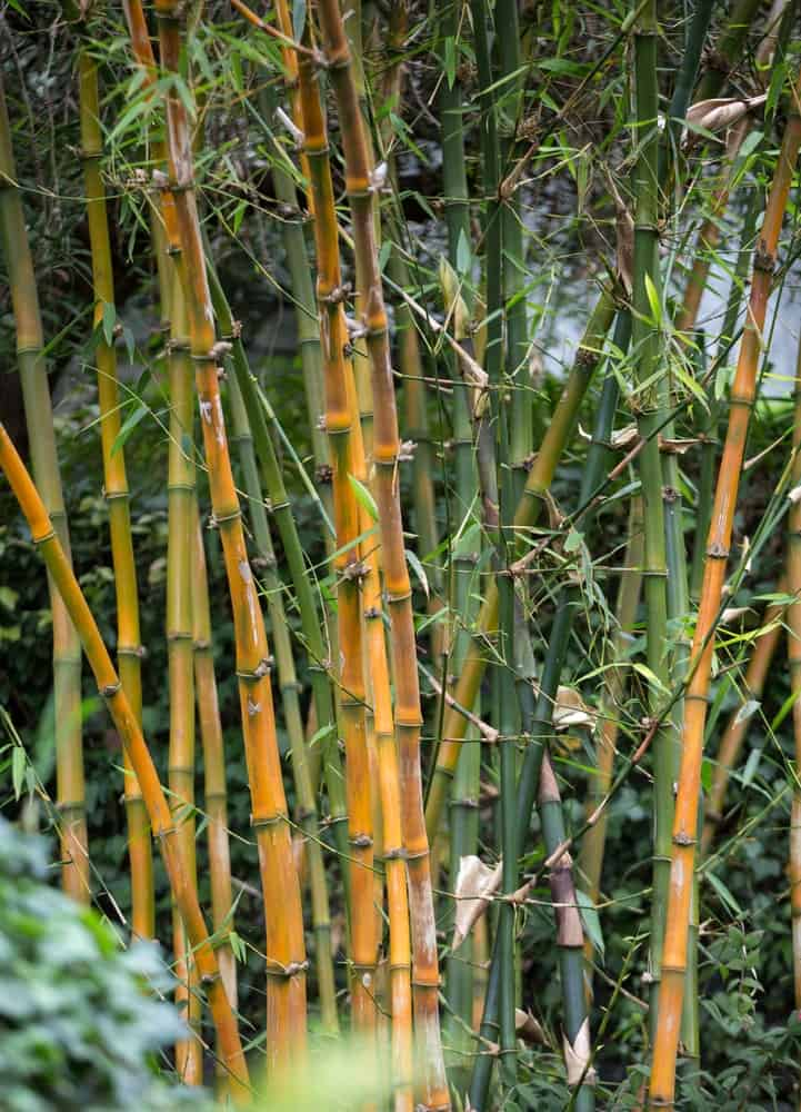 Highlighting Different Characteristics Of Bamboo And More