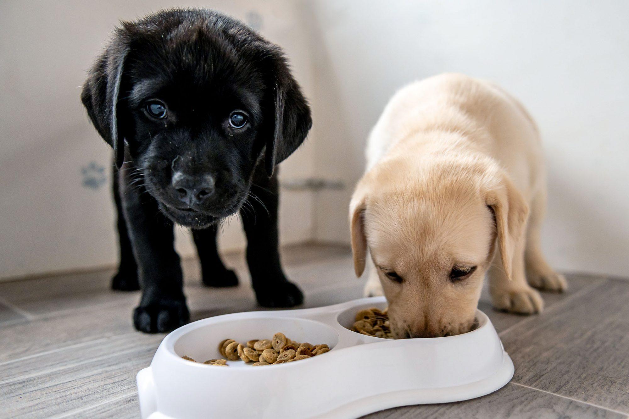 essentials for puppy