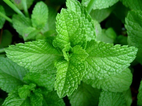 12 Herbs You Need To Grow In Your Medicinal Garden