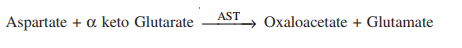 AST catalyse reaction