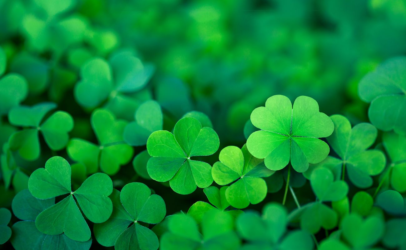 Lots of green 4 leaf clovers