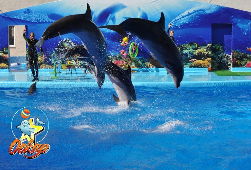 Дельфинарий в Кирилловке ⋆ azovhot.com