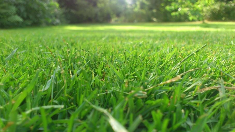 Une image contenant herbe, extérieur, plante, champ  Description générée automatiquement