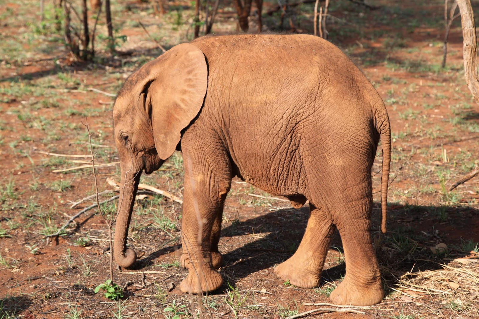 How can we help save African elephants?