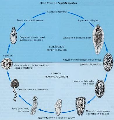 ADL: Parasitología, Micosis y Enfermedades Infecciosas