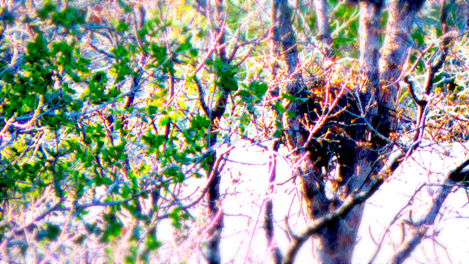 Nest-proc.jpg