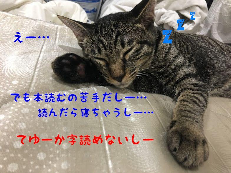 【子供におすすめ】ねこの本・猫の絵本3選