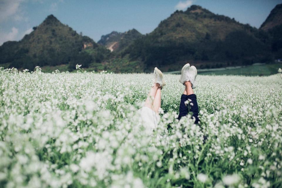mộc châu mùa cải trắng