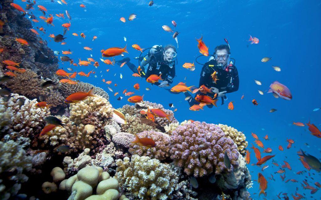 Hướng dẫn lặn biển ngắm san hô tại Cô Tô
