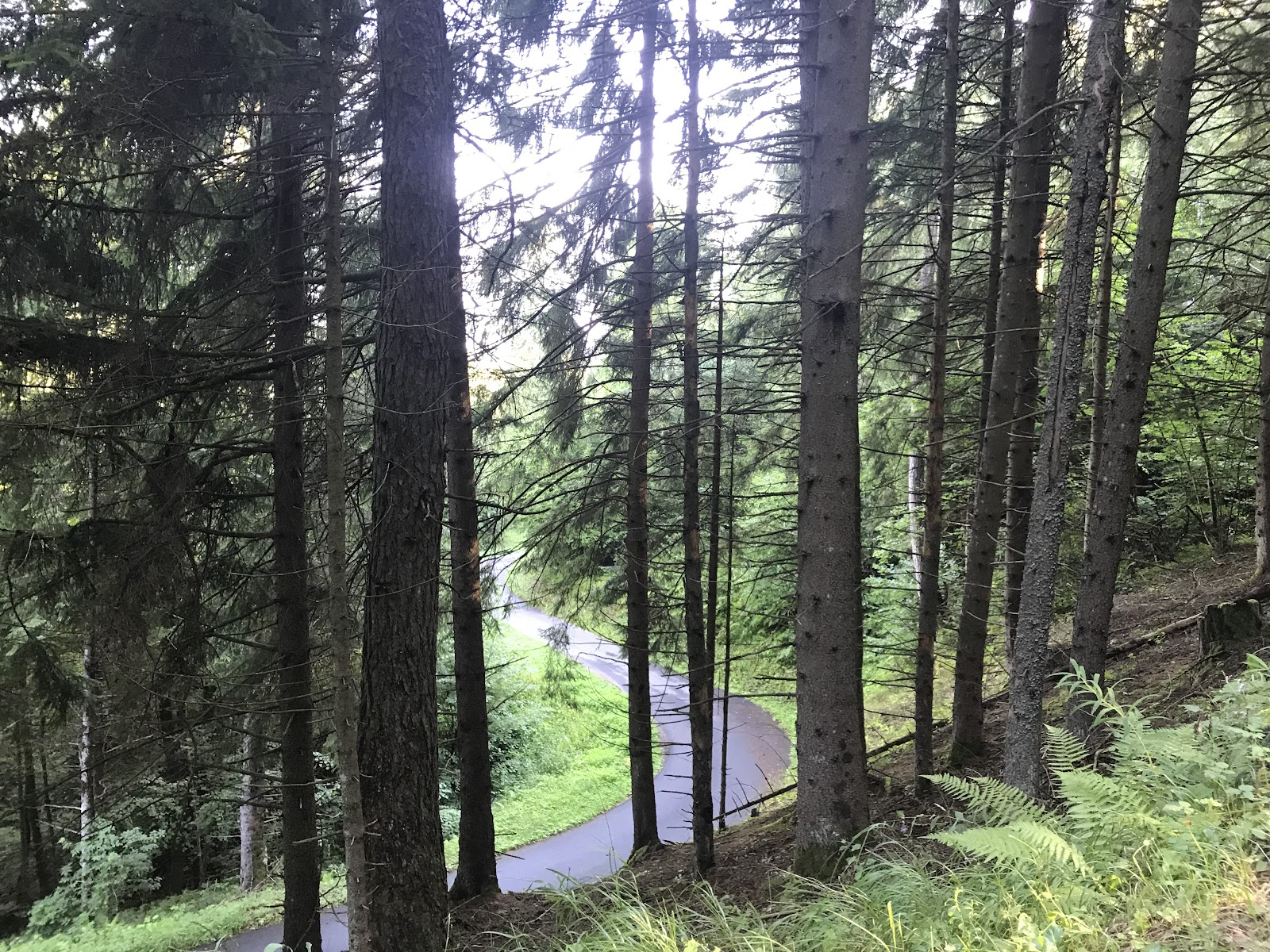 Cycling  Passo del Mortirolo from Tovo - narrow road with thick forest