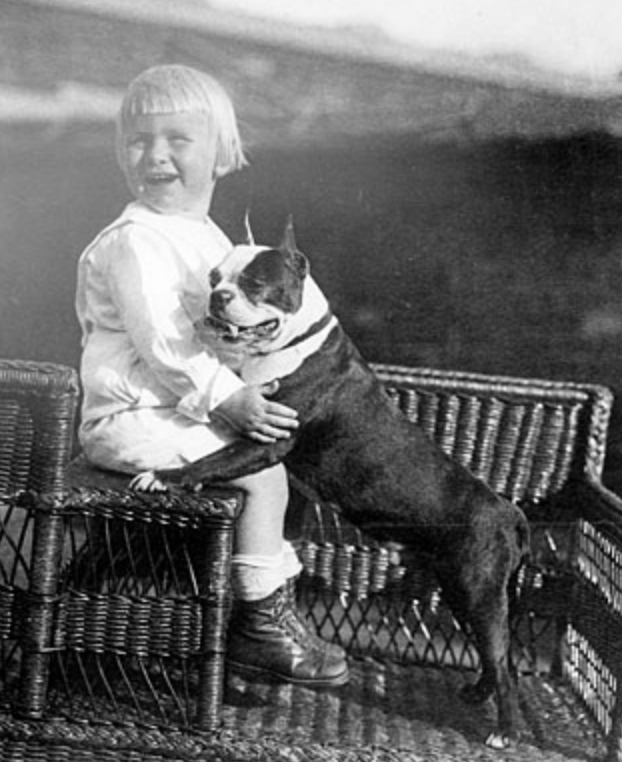 15 Interesting Facts About Boston Terriers. President Ford and his Boston Terrier. Boston Terrier Society.