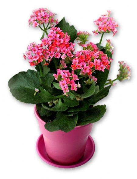 Kết quả hình ảnh cho ý nghĩa hoa sống đời
