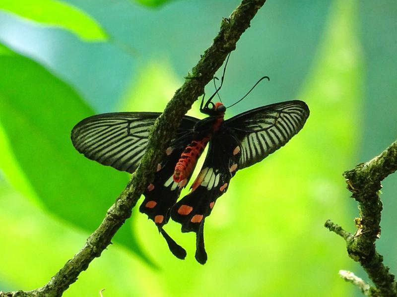 باغ پروانه های مالزی