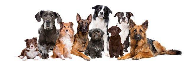 Image result for Dog Boarding