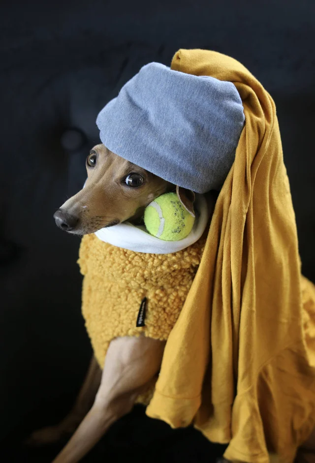 Girl with a Pearl Earring recreated with a dog as the model and tennis ball for earring