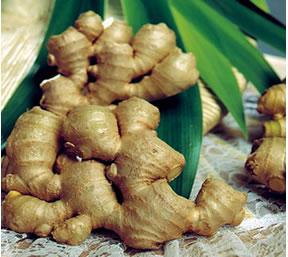http://agrifarming.in/wp-content/uploads/2015/03/Harvested-Ginger.jpg