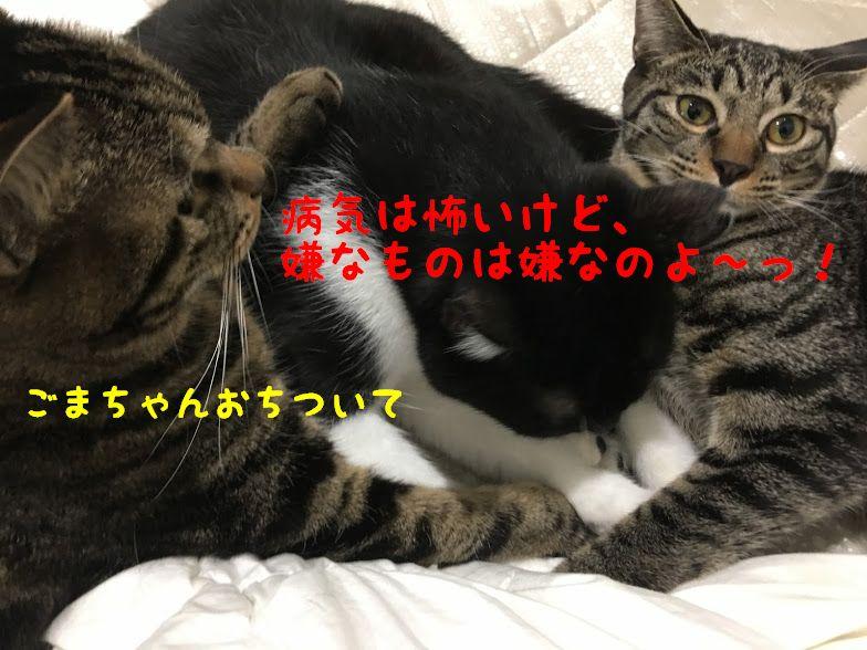 室内飼いの猫にワクチン接種は必要?種類と接種時期や副作用について