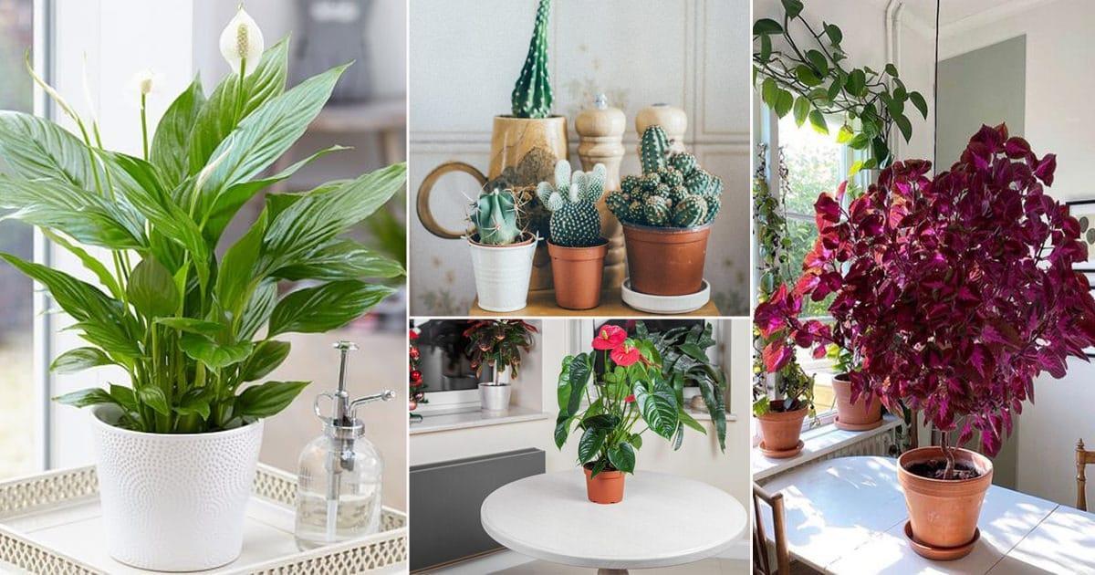 14 Indoor Plants that Grow from Seeds   Balcony Garden Web