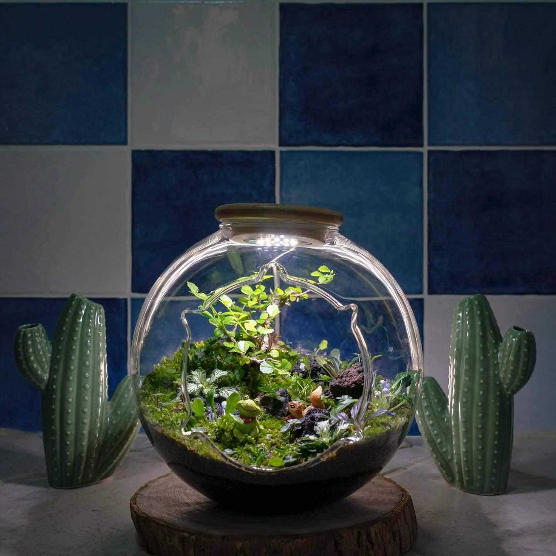 微景觀苔蘚生態缸