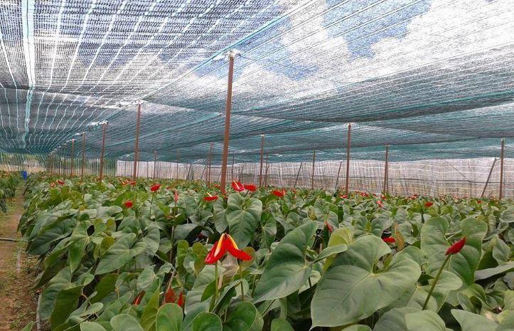 Kết quả hình ảnh cho Lưới che nắng cho cây trồng