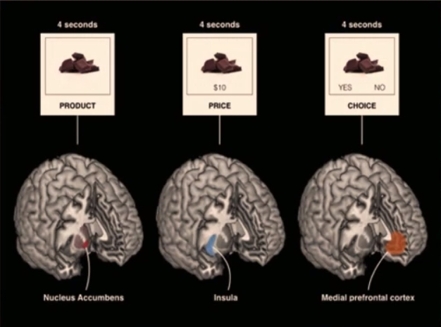 """Esperimento di neuromarketing di Knutsnon: mostra le tre aree del cervello che si attivano di fronte a diversi stimoli. La sola immagine del cioccolato stimola il Nucleus Accumbens. Il cioccolato associato al prezzo stimola l'Insula. La possibilità di scegliere """"si"""" o """"no"""" in 4 secondi stimola la corteccia prefrontale mediale. Fonte: Marketing Ignorante"""