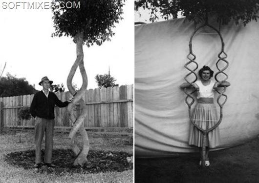 Аксель Эрландсон, создатель «Tree Circus»2