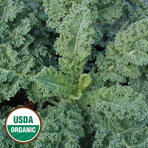 https://www.seedsavers.org/site/img/seo-images/0624-dwarf-blue-curled-scotch-kale-organic.jpg