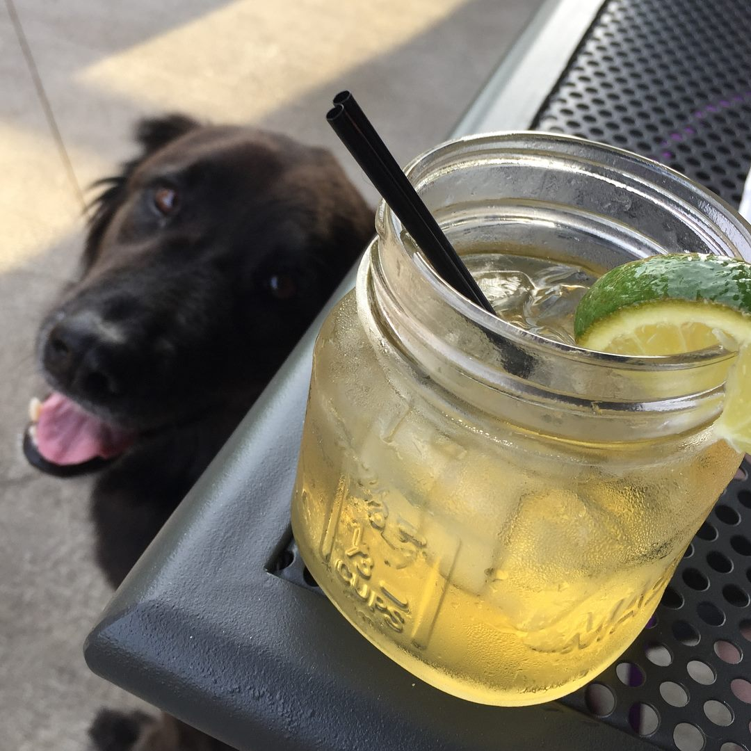 drink on a table with a dog in the background
