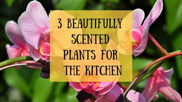 Beautifully Scented Plants