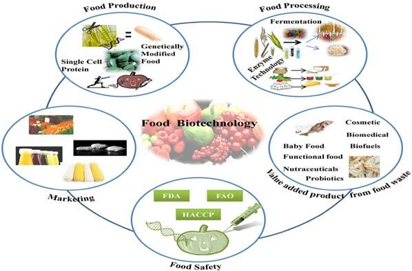 Food Biotechnology: A Step Towards Improving Nutritional Quality of Food  for Asian Countries | Bentham Science