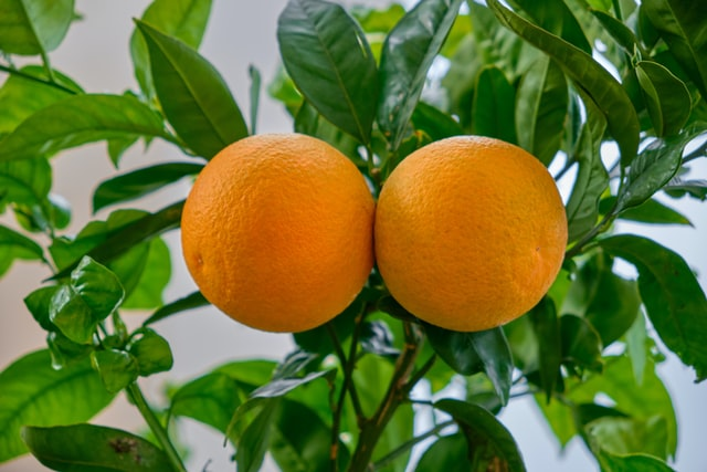 Patio Fruit Trees: How to Choose the Right One for You