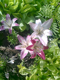 Лилии.Фото