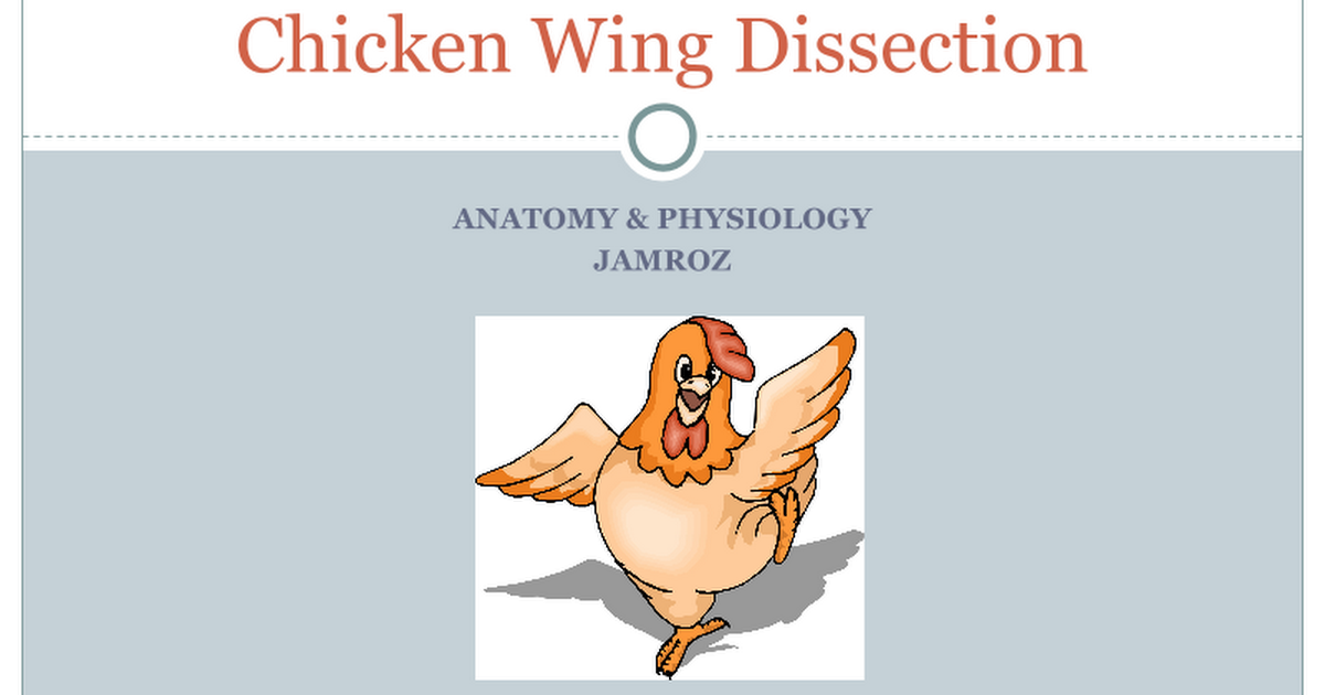 Chicken Wing Dissection PowerPoint - Google Slides