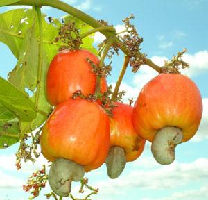 Trái Cây Nhiệt Đới  QFK8hnAPgvbgUkj6xlp6gRbyNzxgz129KV0UdROcaffY6vUbXiM4LJU339rJDwxVPmwXxz8mp36AfPnfsomwirQHzv671Xdfk9sqdBnca6Kx6TwKrrVZfqDcUkQw2Zf98vbRDfnp